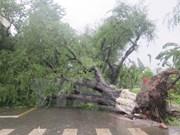 Provincia vietnamita de Khanh Hoa adopta medidas preventivas ante tifón