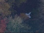 Fallece piloto vietnamita en vuelo de entrenamiento en Reino Unido