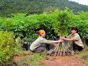 Vietnam prevé ingresar fondo multimillonario por exportaciones de productos silvícolas