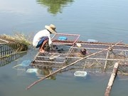Vietnam impulsa aplicación de tecnologías modernas en la cría de animales acuáticos