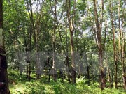 Firman Vietnam y Laos contrato de cultivo y procesamiento de caucho