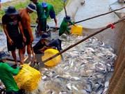 Vietnam busca impulsar exportaciones de pescado Tra a UE