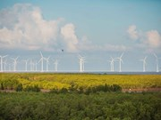 Sector de energía eólica en Vietnam acapara atención de inversores extranjeros
