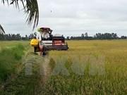 Vietnam ingresa fondo multimillonario por exportación de arroz en 11 meses