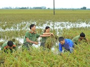 Vietnam se esfuerza por elevar número de nuevas zonas rurales