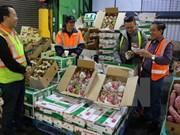 Vietnam ingresa 3,34 mil millones de dólares por exportaciones de frutas y verduras