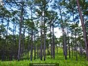 UE concede 3,3 millones de dólares a Camboya para protección forestal