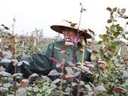 Hanoi reconoce otras ocho aldeas de oficios