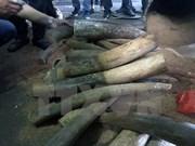 Detectan en Hanoi caso de transporte ilegal de marfil