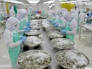 Pronostican positivo desarrollo de exportación de camarones vietnamitas