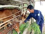 Impulsan la producción en zonas pobres en Vietnam