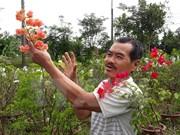 Asociación de Agricultores de Vietnam traza orientaciones para su desarrollo