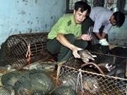 Detienen en provincia survietnamita transporte ilegal de 114 pangolines