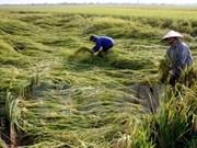 Recaudan 480 mil dólares a favor de agricultores con motivo del Tet