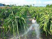 Reconocen más zonas rurales de nuevo estilo en localidad vietnamita