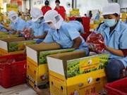 Japón financiará proyecto de desarrollo de agricultura orgánica en Vietnam