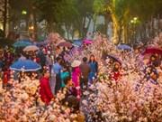 Festival de flores de cerezos tendrá lugar en Hanoi en marzo próximo
