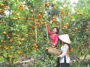 """Lai Vung: """"Reino de las mandarinas"""""""