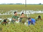 Aumentan calidad de vida de pobladores en zonas rurales en provincia norvietnamita