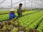 Introducen tecnologías de cultivo de verduras limpias de Vietnam en Singapur