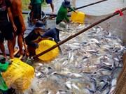 Provincia vietnamita amplía área de cultivo de peces Tra