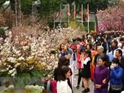 Festival de flores de cerezo en Hanoi se extiende hasta hoy