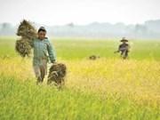 FIDA ayuda a Myanmar a mejorar ingresos de los agricultores