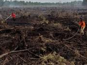 Naciones Unidas elogia esfuerzos de Indonesia para restaurar las turberas