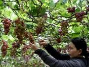 Vietnam prioriza el desarrollo del turismo agrícola