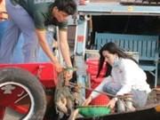 Ciudad vietnamita libera decenas de toneladas de alevines a hábitat natural