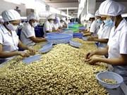 Alza notable en valor de exportaciones de anacardos vietnamitas