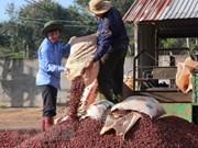 Exportaciones de café de Vietnam alcanzan mil millones de dólares en primer trimestre