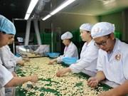 Vietnam ingresa fondo millonario en el primer trimestre por exportaciones de anacardo