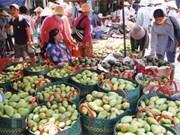 Vietnam exportará famoso mango Hoa Loc a Singapur