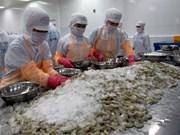 Sector camaronero vietnamita enfrentará escenario desfavorable por aumento de ofertas