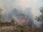 Exhortan a medidas preventivas contra incendios forestales en localidades de Vietnam