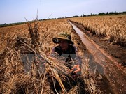 Debaten soluciones para enfrentamiento a la sequía y la salinización en delta de Mekong