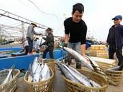 Crece producción pesquera de Vietnam en primer cuatrimestre