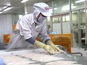 Exportadores de pescado Tra vietnamita tienden a ampliar el mercado de ASEAN