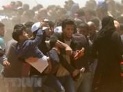 Vietnam expresa condolencia a Palestina por pérdidas humanas durante enfrentamiento en Gaza