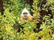 Foro sobre reserva de biodiversidad en Vietnam