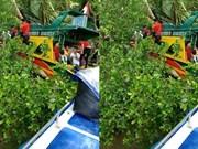 Cinco personas murieron por choque de lancha en Indonesia
