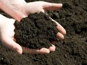 Promueve Vietnam producción agrícola limpia