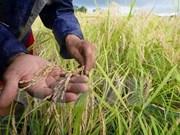 Órgano de la ONU ratifica respaldo a Vietnam en adaptación al cambio climático
