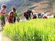 En Hanoi seminario sobre enmiendas jurídicas para erradicar trabajo infantil
