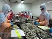 Vietnam avanza en el propósito de consolidar su posición en la producción de camarones