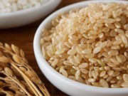 Compañía privada vietnamita gana subasta para exportar arroz integral a Corea del Sur