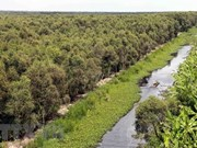 Acelera Vietnam labores de restauración de bosques