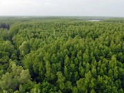 Despliegan en Delta del río Mekong programa de respuesta al cambio climático