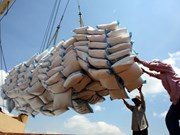 Promueven exportaciones de arroz de Vietnam a mercado chino